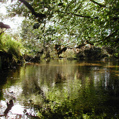 A quiet pool on the De Lank.